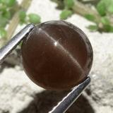 3.68 ct Round Cabochon Brown Cat's Eye Scapolite Gem 8.90 mm  (Photo B)