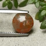 thumb image of 1.9ct Round Cabochon Multicolor Coral (ID: 492262)