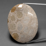 thumb image of 92.8ct Oval Cabochon Multicolor Fossil Coral (ID: 391270)