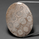 thumb image of 78.5ct Oval Cabochon Multicolor Fossil Coral (ID: 391275)