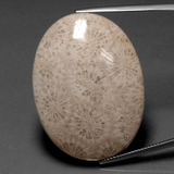 thumb image of 53.3ct Oval Cabochon Multicolor Fossil Coral (ID: 391277)
