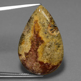 thumb image of 18.5ct Pear Cabochon Multicolor Fossil Coral (ID: 447338)