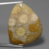 thumb image of 28.6ct Fancy Cabochon Multicolor Fossil Coral (ID: 447395)