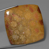 thumb image of 60.3ct Cushion Cabochon Multicolor Fossil Coral (ID: 447406)