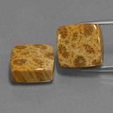 thumb image of 16.1ct Square Cabochon Multicolor Fossil Coral (ID: 454634)
