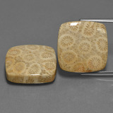 thumb image of 27.1ct Square Cabochon Multicolor Fossil Coral (ID: 455044)