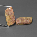 thumb image of 22.7ct Fancy Cabochon Multicolor Fossil Coral (ID: 455421)