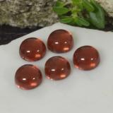 thumb image of 2.2ct Round Cabochon Red Pyrope Garnet (ID: 467417)