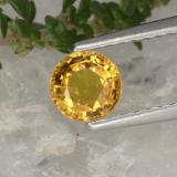 thumb image of 0.7ct Round Facet Yellow Golden Sapphire (ID: 468269)