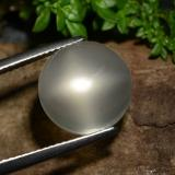 thumb image of 7.2ct Round Cabochon Smoke Star Moonstone (ID: 487641)