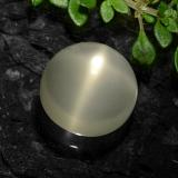 thumb image of 6.8ct Round Cabochon Cream Star Moonstone (ID: 490939)