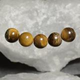 thumb image of 19.7ct Drilled Sphere Gold Brown Tiger's Eye (ID: 469118)